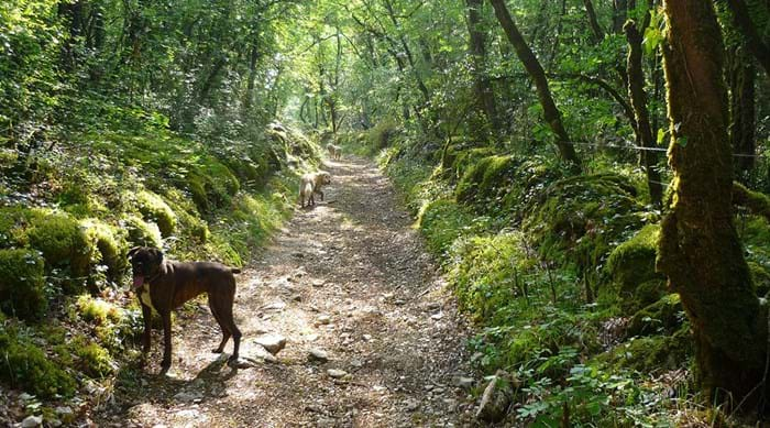 Dogs will just love to explore the french woodlands in the South of France