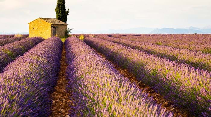 Enjoy the fragrant scent of lavender as you stroll through the Plateau de Valensole