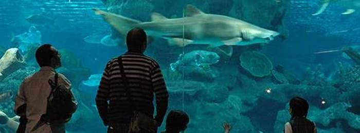 Au plus près des requins au Blue Reef Aquarium à Hastings