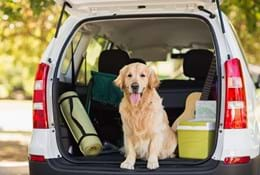 Travelling with your pet